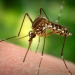 NYC Health Dept Confirms First Human Case of West Nile Virus for 2017 Season