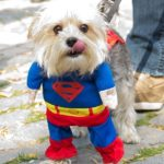New Yorkers Dress up Dogs for Halloween Costume Contest