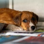 Animal Cruelty Is A Predictor Of Abuse