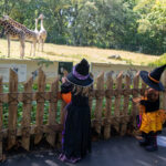 Fall Favorite 'Boo At The Zoo' To Feature Halloween-Themed Activities At The Bronx Zoo